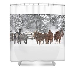 Cold Ponnies Shower Curtain by Diane Bohna