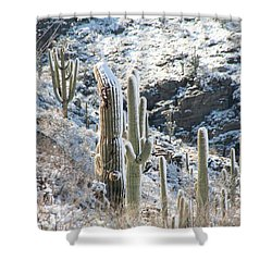 Cold Saguaros Shower Curtain
