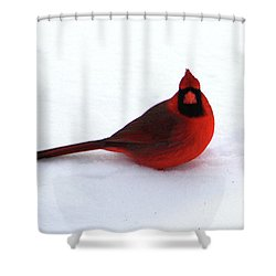Shower Curtain featuring the photograph Cold Seat by Alyce Taylor