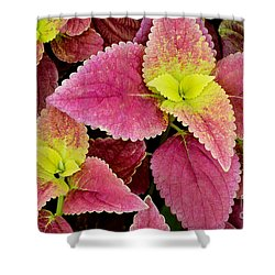 Coleus Colorfulius Shower Curtain