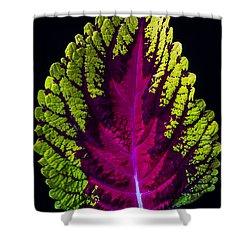 Coleus Leaf Shower Curtain by Garry Gay