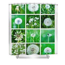 Collage June - Featured 3 Shower Curtain