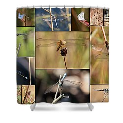 Collage Marsh Life Shower Curtain by Carol Groenen
