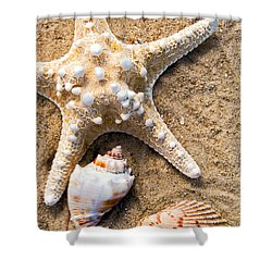 Collecting Shells Shower Curtain by Colleen Kammerer