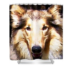 Collie Dog Art - Sunshine Shower Curtain by Sharon Cummings