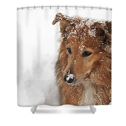 Collie In The Snow Shower Curtain by Jeannette Hunt