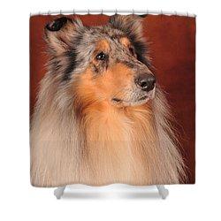 Shower Curtain featuring the photograph Collie Portrait by Randi Grace Nilsberg
