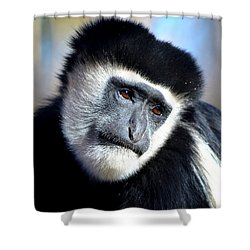 Shower Curtain featuring the photograph Colobus Contemplation by Deena Stoddard