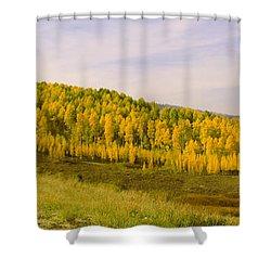 Colorado Aspens Shower Curtain by Brian Harig