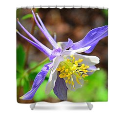 Colorado Blue Columbine Flower Shower Curtain