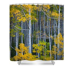 Colorado Fall Color Shower Curtain by Inge Johnsson