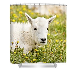 Colorado Kid Shower Curtain by Scott Pellegrin