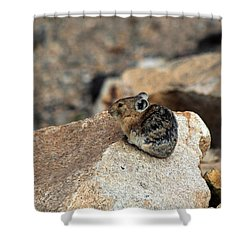 Colorado Pika Shower Curtain
