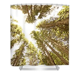 Colorado Rocky Mountain Forest Ceiling Shower Curtain by James BO  Insogna