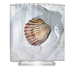 Colored Seashell  Shower Curtain