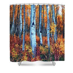 Colorful Aspens Shower Curtain by Brian Kerls