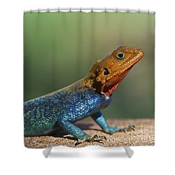 Colorful Awesomeness... Shower Curtain