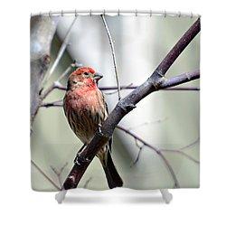 Colorful Bird In Winter Shower Curtain by Susan Leggett