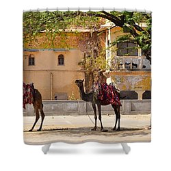 Colorful Camels - Jaipur India Shower Curtain by Kim Bemis