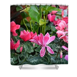 Colorful Cyclamen Shower Curtain by Carla Parris