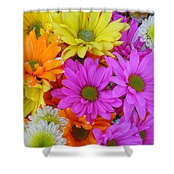 Colorful Daisies Shower Curtain by Sami Martin