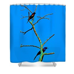 Colorful Duet Shower Curtain by Zafer Gurel