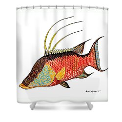 Shower Curtain featuring the painting Colorful Hogfish by Steve Ozment