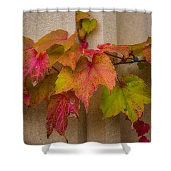 Colorful Ivy Shower Curtain