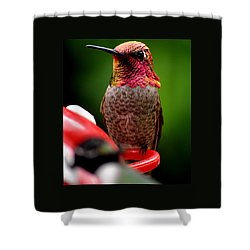 Shower Curtain featuring the photograph Colorful Male Anna Hummingbird On Perch by Jay Milo