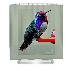 Shower Curtain featuring the photograph Colorful Male Costa's On Perch by Jay Milo