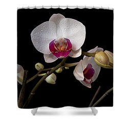 Colorful Moth Orchid Shower Curtain by Ron White
