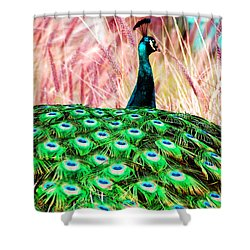 Colorful Peacock Shower Curtain by Matt Harang