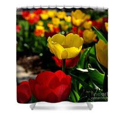 Colorful Spring Tulips Shower Curtain