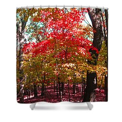 Colorful Woodland Shower Curtain
