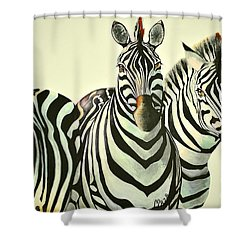 Colorful Zebras Painting Shower Curtain