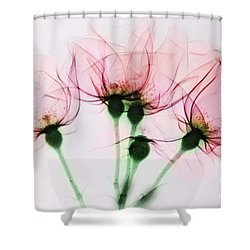 Colorized X-ray Of Roses Shower Curtain by Scott Camazine