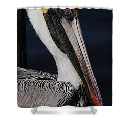 Colors Of A Pelican Shower Curtain