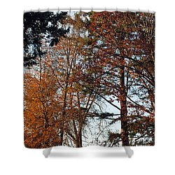 Shower Curtain featuring the photograph Colors Of Autumn by Tikvah's Hope