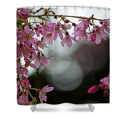 Shower Curtain featuring the photograph Colors Of Spring - Cherry Blossoms by Jordan Blackstone