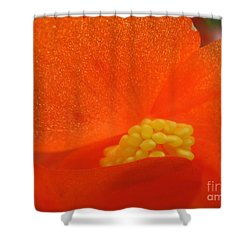 Colors Of The Sun Shower Curtain by Patti Whitten