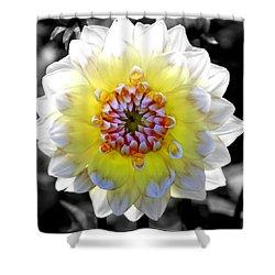 Colorwheel Shower Curtain by Karen Wiles