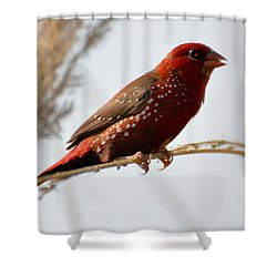 Colour Me Red Shower Curtain by Fotosas Photography
