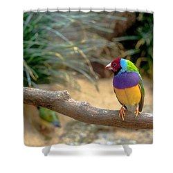 Colourful Bird Shower Curtain by Daniel Precht