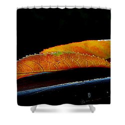 Shower Curtain featuring the photograph Colourfull End by Marija Djedovic