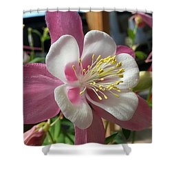 Shower Curtain featuring the photograph Columbine by Caryl J Bohn