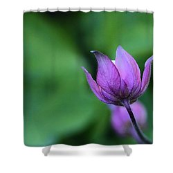 Columbine Flower Bud Shower Curtain