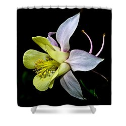 Columbine Shower Curtain by Jane McIlroy