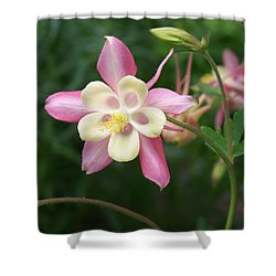 Shower Curtain featuring the photograph Columbine by Kathryn Meyer