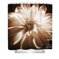 Come Closer Shower Curtain by Patti Whitten