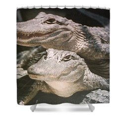 Florida Alligators Come Closer Shower Curtain by Belinda Lee